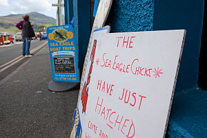 Sign announcing the hatching of White-tailed sea eagle chicks, Portree, Skye, Scotland, UK, June 2011  -  Peter Cairns / 2020VISION