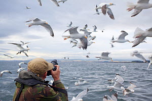 Photographer on boat trip to Bass Rock, photographing a mixed flock of seabirds, Firth of Forth, North Berwick, Scotland, UK, July 2010  -  Peter Cairns / 2020VISION