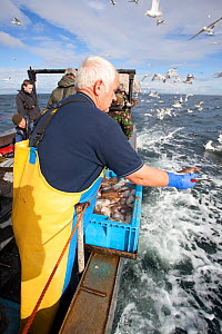 Fisherman throwing out fish scraps to attract seabirds for tourists and photographers on boat trip to Bass Rock, North Berwick, Scotland, UK, July 2010  -  Peter Cairns / 2020VISION
