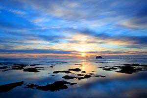 Bass Rock at dawn, North Berwick, Scotland, UK, August. 2020VISION Book Plate. Did you know? Approximately an eighth of the world's Northern gannet population breeds on Bass Rock. - Peter Cairns / 2020VISION