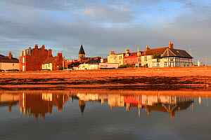 View over coastal town of North Berwick at dawn, Scotland, UK, August  -  Peter Cairns / 2020VISION