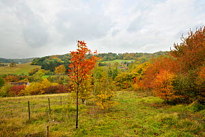 Hazel dormouse (Muscardinus avellanarius) habitat showing connected woodland, hedgerows and gardens, Kent, UK, October 2011, site of monthly Dormouse survey by Kent Mammal Group.  -  Terry Whittaker / 2020VISION