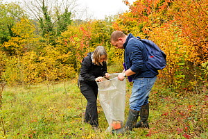 Hazel dormouse (Muscardinus avellanarius), Kent, UK. Members of Kent Mammal Group conduct monthly dormouse survey. Brett Lewis and Lesley Mason check a nest box, October 2011, Model released.  -  Terry Whittaker / 2020VISION
