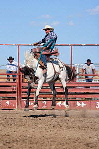 An Indian cowboy tries to stay on a bronc or wild paint horse during the All Indian Rodeo, at the annual Indian Crow Fair, Crow Agency, near Billings, Montana, USA, August 2011, Sequence 1/3  -  Kristel Richard