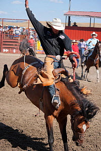 An Indian cowboy tries to stay on a bronc or wild quarter horse during the All Indian Rodeo, at the annual Indian Crow Fair, Crow Agency, near Billings, Montana, USA, August 2011  -  Kristel Richard