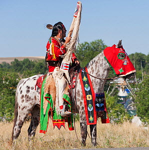 A traditionally dressed Crow Indian man rides an appaloosa horse during the parade, at the annual Indian Crow Fair, at Crow Agency, near Billings, Montana, USA, August 2011  -  Kristel Richard