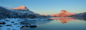Panoramic of Sgurr Tuath and Stac Pollaidh at dawn, with partly frozen Loch Lurgainn in foreground, Coigach, Wester Ross, Scotland, UK, December 2010  -  Mark Hamblin / 2020VISION