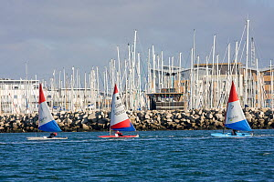 Three dinghies under sail with Poole Harbour beyond, Dorset, England, October 2010.  -  David Woodfall