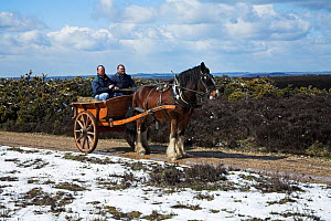 Horse and cart on snow covered heathland, Hampton Ridge, New Forest National Park, Hampshire, UK, April 2008  -  Mike Read