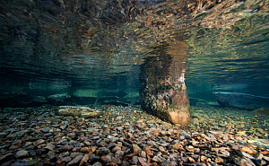Underwater view of a mountain lake, Llyn Idwal, Gwynedd, Snowdonia NP, Wales, UK, December - Graham Eaton