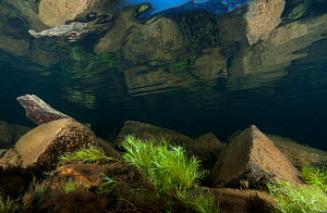 Underwater view of a mountain lake, Llyn Idwal, Snowdonia NP, Gwynedd, Wales, UK, December  -  Graham Eaton