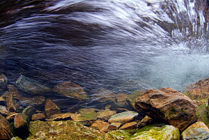 Underwater view of a rapidly flowing mountain stream, Snowdonia NP, Gwynedd, Wales, UK, November  -  Graham Eaton