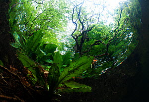 An underwater view of a woodland stream, River Glaslyn, Snowdonia NP, Gwynedd, Wales, UK, May  -  Graham Eaton