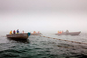 Scup fishermen setting out net off Sakonnet Point, Rhode Island, USA, May 2011. All non-editorial uses must be cleared individually.  -  Onne van der Wal