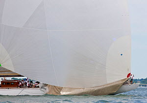 Collecting in jib following spinnaker hoist on board 'Ranger' during the J-class Yacht Regatta, Newport, Rhode Island, USA, June 2011. All non-editorial uses must be cleared individually.  -  Onne van der Wal