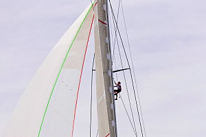 Crew member climbing mast on board 'Ranger' during the J-class Yacht Regatta, Newport, Rhode Island, USA, June 2011. All non-editorial uses must be cleared individually.  -  Onne van der Wal