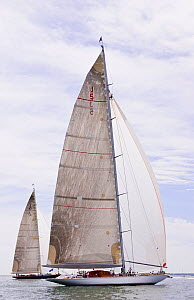 'Velsheda' and 'Ranger' racing under spinnaker during the J-class Yacht Regatta, Newport, Rhode Island, USA, June 2011. All non-editorial uses must be cleared individually.  -  Onne van der Wal