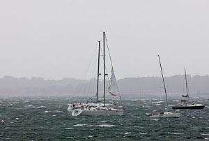 Yachts moored in choppy conditions as Hurricane Irene hits Rhode Island, USA, August 2011.  -  Onne van der Wal