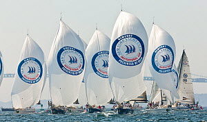 Fleet racing under spinnaker during the New York Yacht Club Invitational Cup, Newport, Rhode Island, September 2011. All non-editorial uses must be cleared individually.  -  Onne van der Wal