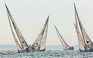 Yachts racing in the sun during the New York Yacht Club Invitational Cup, Newport, Rhode Island, September 2011. All non-editorial uses must be cleared individually.  -  Onne van der Wal