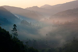 Foggy landscape at sunrise, Bwindi Impenetrable Forest National Park, Uganda, July 2010  -  Inaki Relanzon