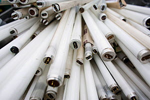 Close up of fluorescent light tubes at a recycling centre, Stroud, Gloucestershire, UK, February 2008.  -  Nick Turner