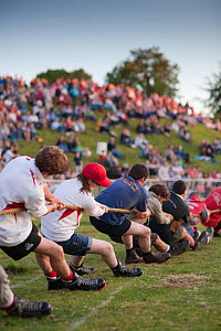 Men pulling on a rope in a tug of war competition, Cotswold Olimpicks, Chipping Campden, Gloucestershire, June 2011.  -  Nick Turner
