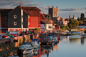 Boats moored on the River Avon at Tewkesbury, Gloucestershire, UK, June 2011.  -  Nick Turner