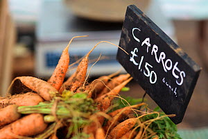 Carrots (Daucus carota) with for sale information sign at Cirencester Farmers Market, Cirencester, Gloucestershire, UK, July 2011.  -  Nick Turner