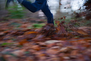 Young boy's legs -  running and kicking mud and fallen leaves in woodland, Norfolk, January 2011 Model released  -  David Tipling / 2020VISION