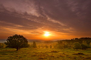 Sun rising over hillside with trees, Beacon Hill Country Park, The National Forest, Leicestershire, UK, October 2011. Did you know? Since 1995 over 2,033 hectares of habitat have been created or manag... - Ben Hall / 2020VISION