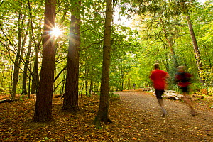 Two people jogging along a path though woodland with the sun shining through trees, Beacon Hill Country Park, The National Forest, Leicestershire, UK, October 2011. Did you know? 8 million trees have...  -  Ben Hall / 2020VISION
