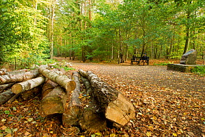 Man sitting on bench with a log pile in the foreground, Beacon Hill Country Park, The National Forest, Leicestershire, UK, October 2011  -  Ben Hall / 2020VISION