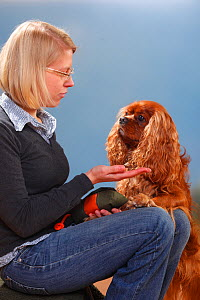Woman offering treat to Cavalier King Charles Spaniel, ruby, male. Model released - Petra Wegner
