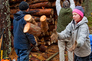 RSPB volunteers collecting firewood for distribution to local community at Christmas, Abernethy Forest NNR, Cairngorms NP, Scotland, UK, December 2011  -  Mark Hamblin / 2020VISION