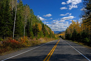 Road passing through a forest, Gaspesie, Quebec, Canada, October 2011  -  Loic Poidevin
