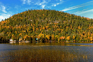 Autumnal forest rising above water, Gaspesie, Gaspe Peninsula, Quebec, Canada, October 2011  -  Loic Poidevin