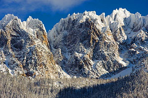 Kangaroo Ridge in the North Cascades, in winter, Okanogan National Forest, Washington, USA, November 2010  -  Gerrit Vyn