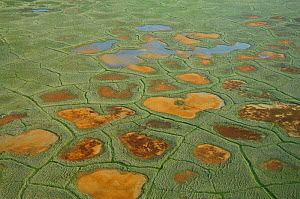 Aerial view of tundra polygons, National Petroleum Reserve, Alaska, USA July 2007  -  Gerrit Vyn