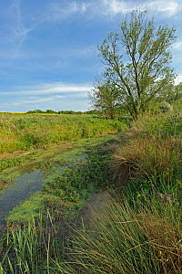 Pond at the edge of a field, RSPB Hope Farm reserve, Cambridgeshire, England, UK, May - Chris Gomersall / 2020VISION