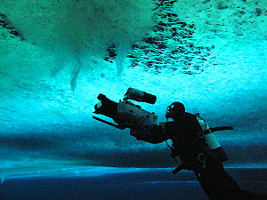 Cameraman, Didier Noirot, filming the formation of 'brinicles' (brine icicles or ice stalactites) under the ice, Ross Sea, McMurdo Sound, Antarctica. Taken on location during the filming of 'Winter' f...  -  Chadden Hunter