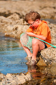 Young boy looks in his net while rockpooling, Falmouth, Cornwall, England, UK, July 2011 Model Released  -  Bertie Gregory / 2020VISION