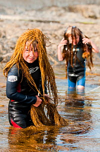 Young boys playing, putting seaweed on their heads whilst rockpooling, Falmouth, Cornwall, England, UK, July 2011 Model released  -  Bertie Gregory / 2020VISION