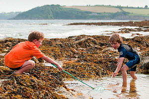 Two boys rock pooling with nets, Falmouth, Cornwall, England, UK, July. Model released  -  Bertie Gregory / 2020VISION