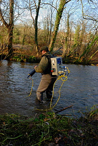 Environment Agency staff Richard Redsull using electrofishing equipment to catch and then release Atlantic salmon (Salmo salar) in connection with a breeding programme, River Itchen, Hamphire, England...  -  Linda Pitkin / 2020VISION