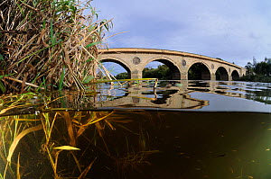 Split-level view of the River Tweed and Coldstream Bridge, Berwickshire, Scotland, UK, October  -  Linda Pitkin / 2020VISION