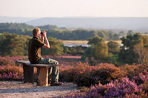 Birdwatcher sitting on a bench scanning for a visiting Osprey, Arne RSPB reserve, Dorset, England, UK, September. Model released.  -  Ross Hoddinott / 2020VISION