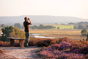 Birdwatcher standing by a bench scanning for a visiting Osprey, Arne RSPB reserve, Dorset, England, UK, September. Model released.  -  Ross Hoddinott / 2020VISION