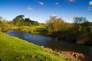 View of the River Till, part of area where The Tweed Foundation are monitoring the population and spread of Signal Crayfish (Pacifastacus leniusculus), Northumberland, England, UK, October - Rob Jordan / 2020VISION