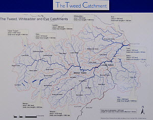 Map of the River Tweed catchment area displayed in the offices of The Tweed Foundation, Roxburghshire, Scotland, UK, October  -  Rob Jordan / 2020VISION